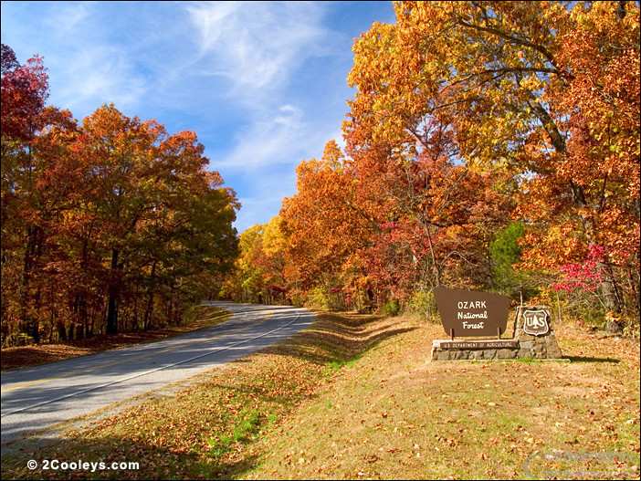 48_fall_foliage_roads.jpg