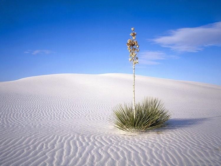white-sands.jpg