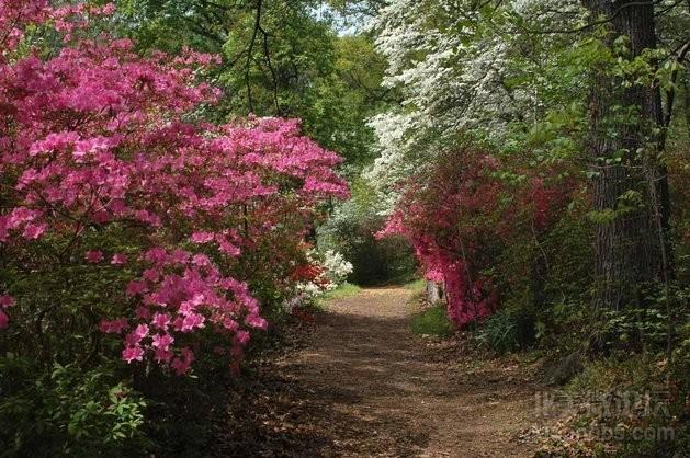 azaleas-arboretum-2450-1155.jpg