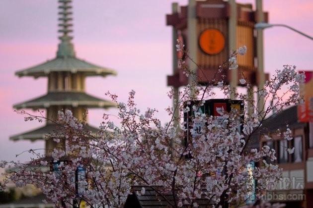 Cherry-Blossom-Festival_GEOS-SF.jpg