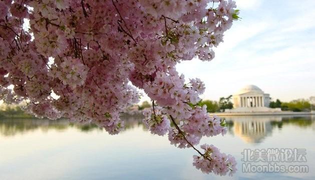 National-Cherry-Blossom-Festival-Washington.jpg