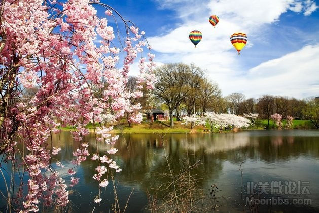 The-Cherry-Blossom-Festival-in-Branch-Brook-Park-New-Jersey.-Photo-by-Gary-718-a.jpg