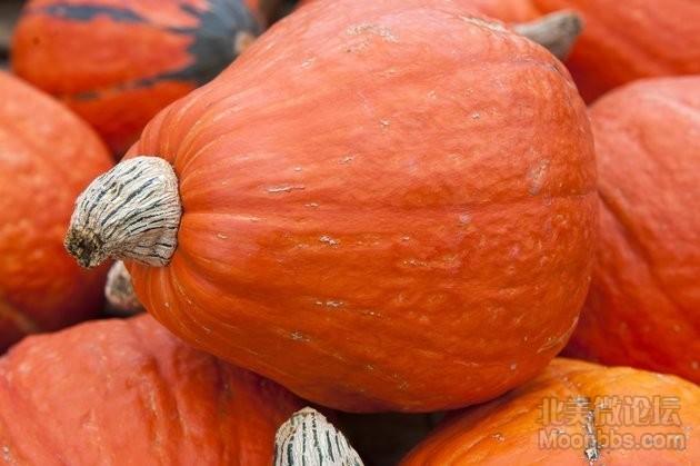 pumpkins161414111211.jpg