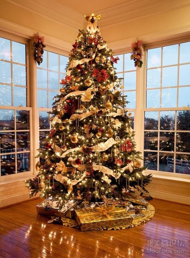 bigstock-Beautiful-xmas-tree-at-dusk-11288822.jpg