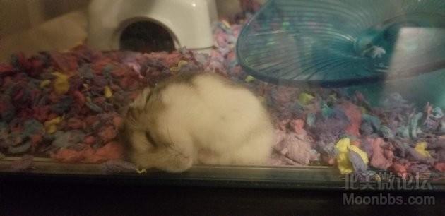 奇葩的睡姿,我也是很无奈