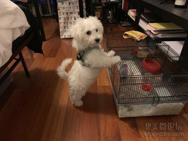 笼子这么大,朋友的狗。狗就不送了,不让朋友会打死我。哈哈哈