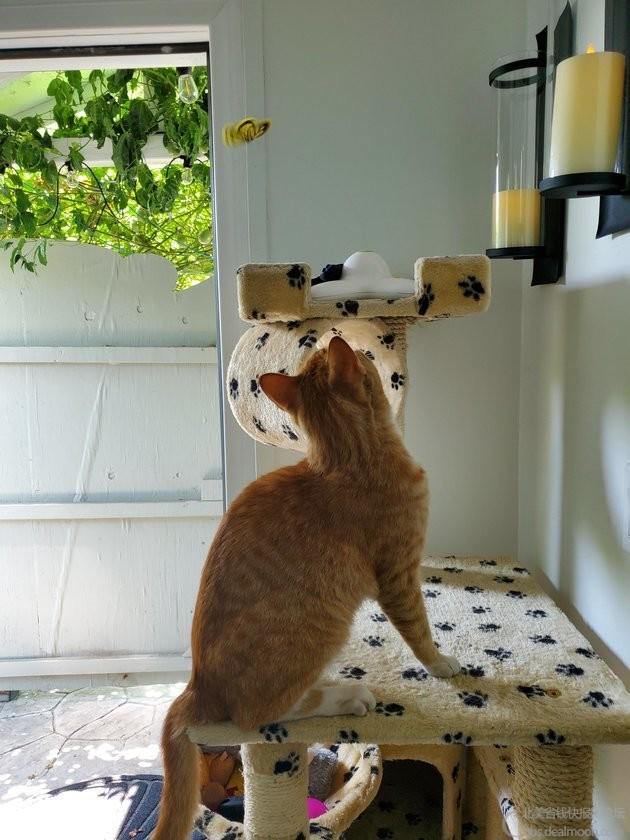 猫蝴蝶玩具