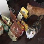 领了九袋免费猫粮!
