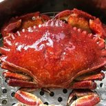 【星语星愿-巨蟹座】捉了几只巨蟹