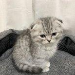买了个巴掌大的小奶猫