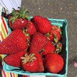 晒一晒好好吃的草莓
