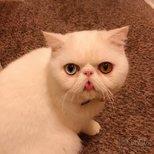 猫咪零食ciao大礼包