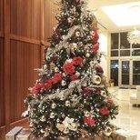 【圣诞树】最后一天晒圣诞树
