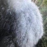 Costco西藏lamb真皮抱枕
