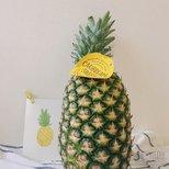#经验# costco的菠萝