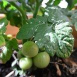 #经验#【菜地贴】购买种子和苗的经验
