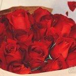 【为爱鼓掌】50朵玫瑰花