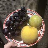 排排坐,吃果果