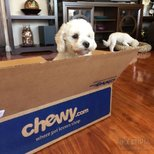 Chewy shipping超快價格也好