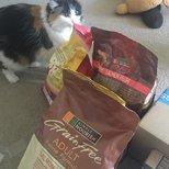#经验#也去领了猫粮