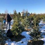 【圣诞树】人生中第一个fresh cut的圣诞树