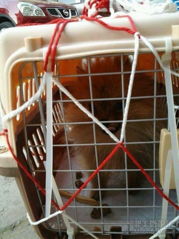 狗狗刚到北京