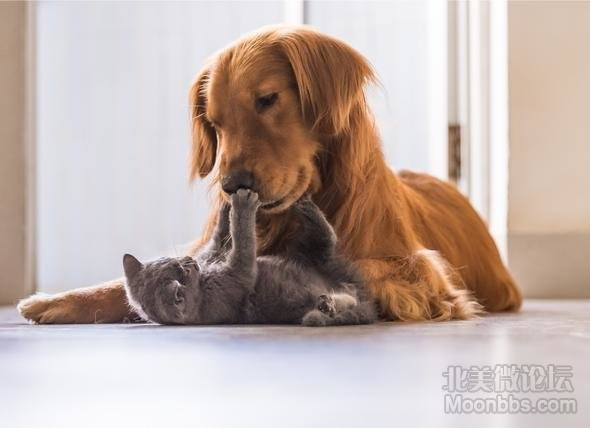 introduce-dog-to-cat.jpg