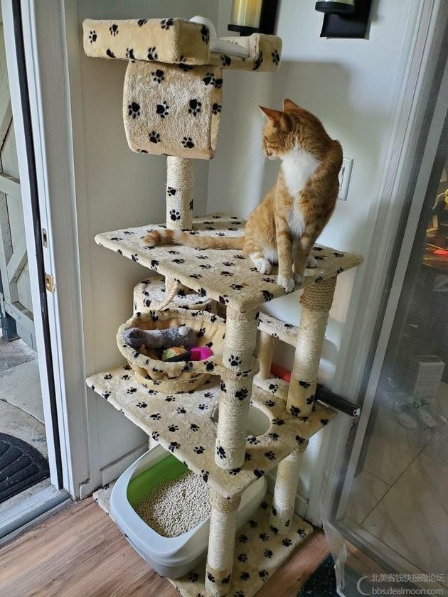 猫爬架+猫厕所