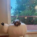 target sheep ottoman