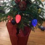 【我家圣诞树】